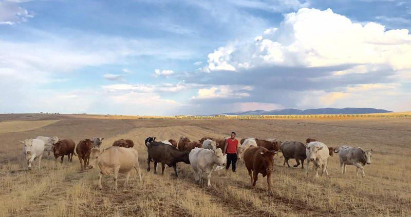 Alfonso Ramirez con el ganado